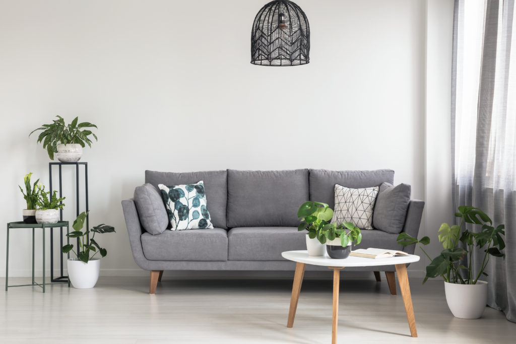 Real photo of a simple living room interior with a grey sofa, plants and coffee table